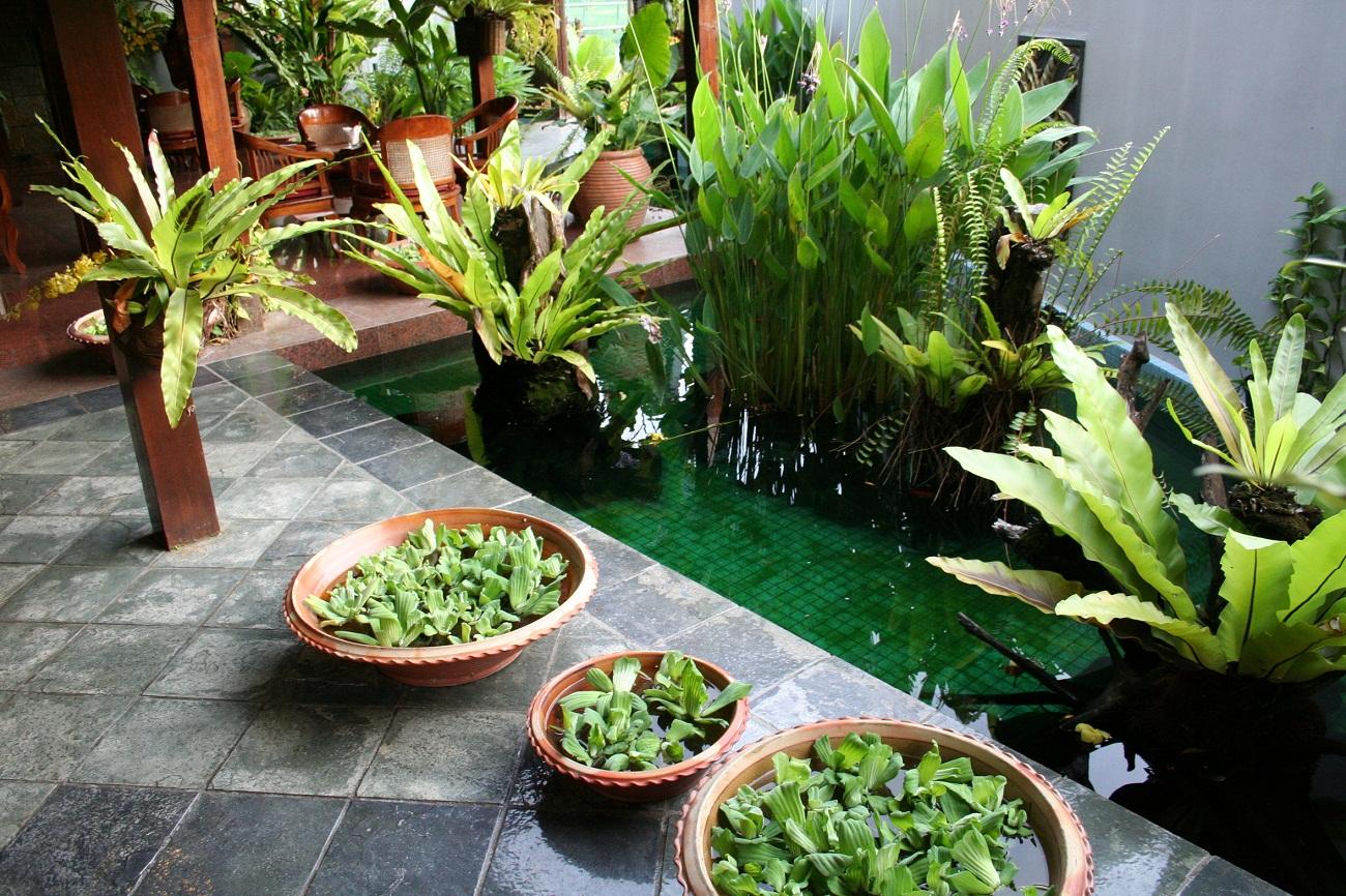 Les plantes dépolluantes pour un jardin plus sain