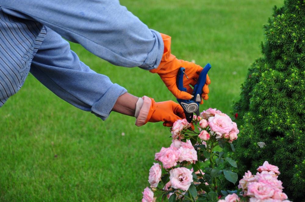 Faire appel à un service de jardinage