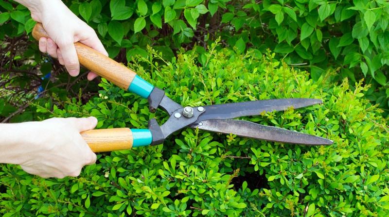 Conseils et astuces pour avoir un magnifique jardin for Tarif entretien jardin