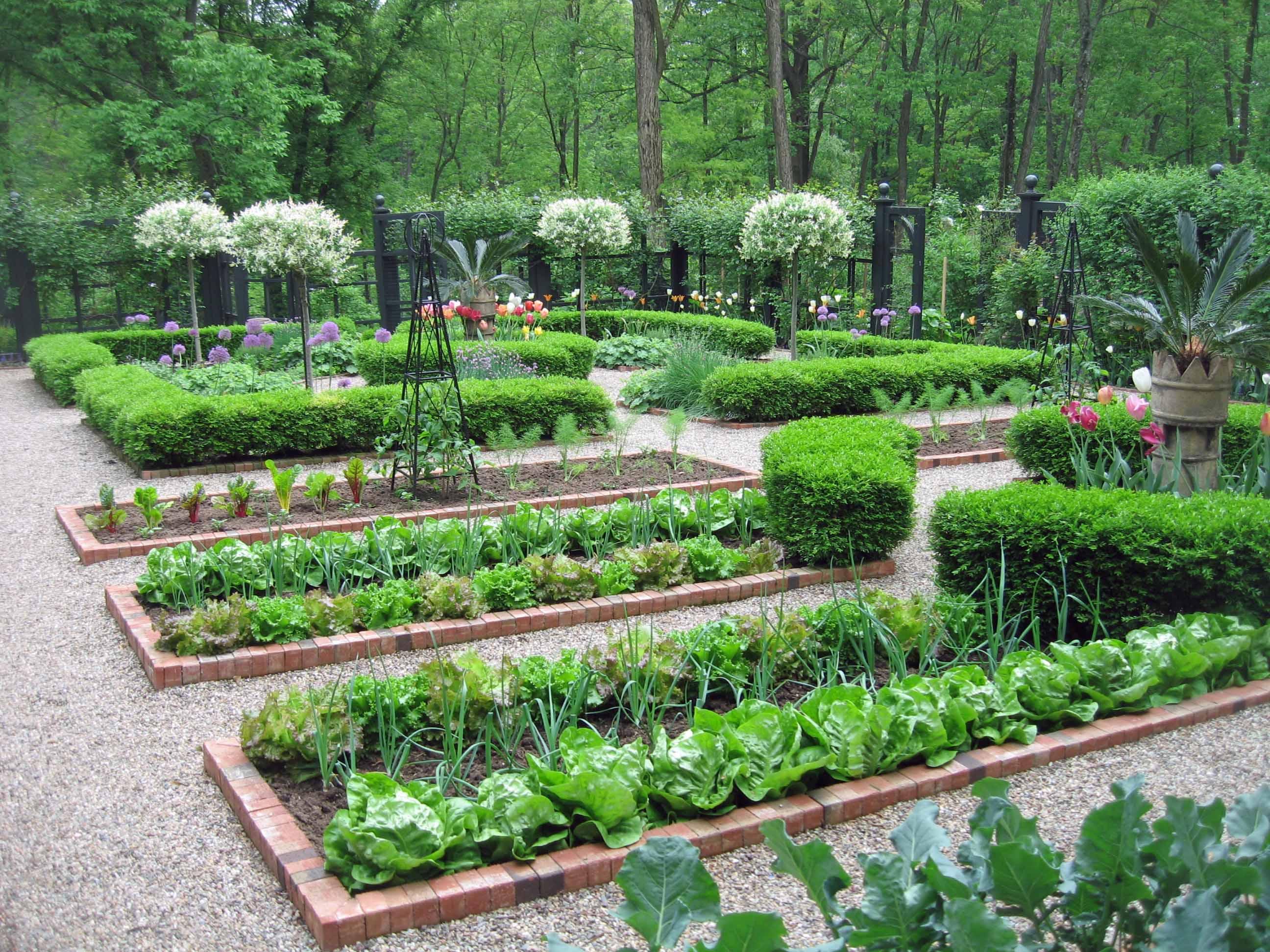 Conseils et astuces pour avoir un magnifique jardin for Veg garden design ideas