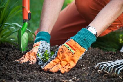 Conseils et astuces pour avoir un magnifique jardin for Conseil pour jardiner