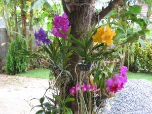 Conseils et astuces pour avoir un magnifique jardin des for Conseil sur les plantes