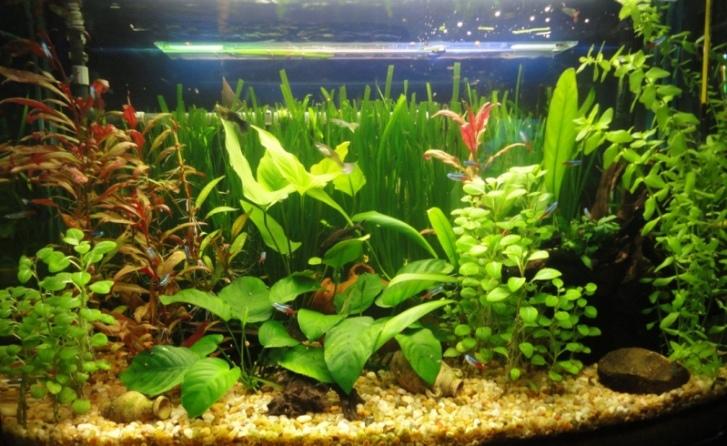 plante-aquatique