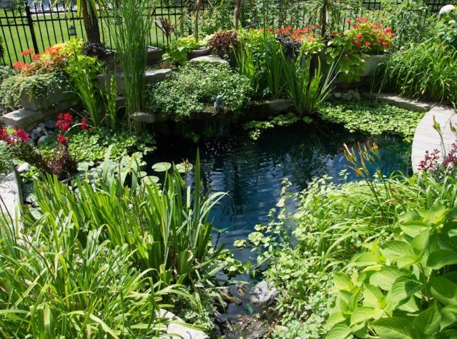 Conseils et astuces pour avoir un magnifique jardin for Plante bassin exterieur