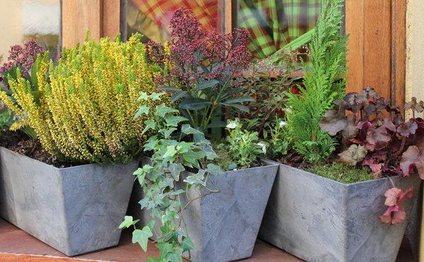conseils et astuces pour avoir un magnifique jardin. Black Bedroom Furniture Sets. Home Design Ideas