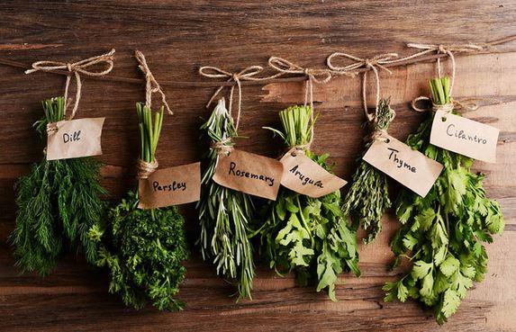 Les herbes aromatiques indispensables dans son potager
