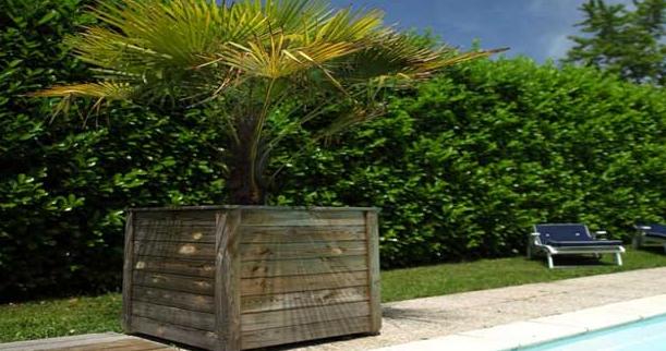 Comment choisir son palmier et en prendre soin en hiver