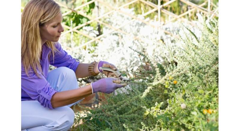 Ce que vous pouvez faire pour aider les plantes durant une canicule